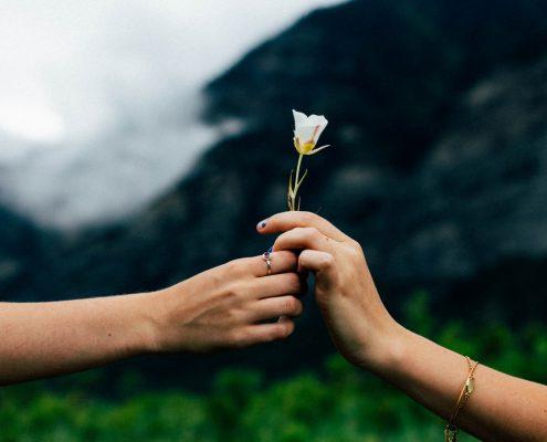 Hände übergeben Blume
